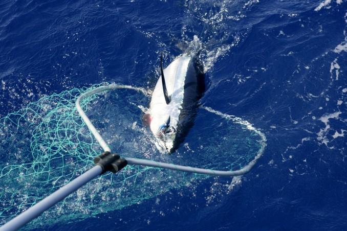 рыбалка в океане фото