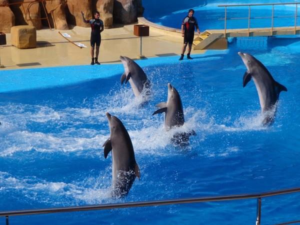 Скачать Игру Дельфин Шоу - фото 6
