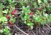 Почва Иркутской области