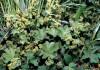 Растительность иркутской области