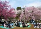 Почему японцы массово устраивают пикники на открытом воздухе в конце марта?