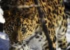 Земля леопарда
