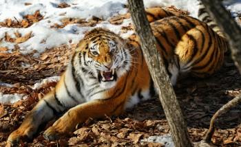 Приморскому Сафари парку исполнилось 10 лет
