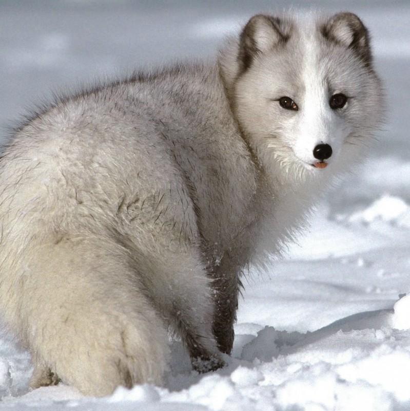 Животный мир острова Сахалин wiki по Сахалинской области Отдых  Животный мир острова Сахалин