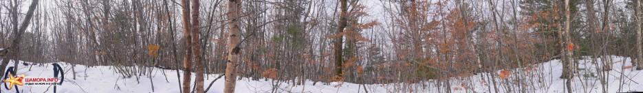 вида с вершинки никакого, всё заросло молодняком (высокие деревья были спилены, дабы не мешать обзору вышки) | Горы Пржевальского