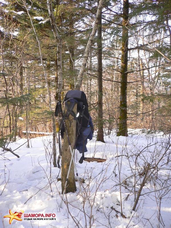 вот и Сторожевая 1127м. знака нет, только срубленный не полностью ствол дерева обозначает вершину. | Горы Пржевальского