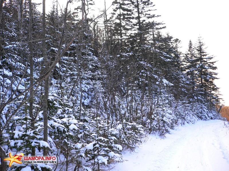 молодой ельник-примета близкой вершины этих гор. дорога идёт дальше, а нам на вершину уже по колено в снегу. | Горы Пржевальского