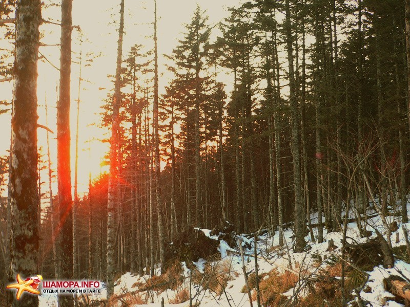 солнце в горах садиться стремительно и мы несёмся вниз по умирающему хвойному склону. через скокато лет деревья сгниют на корню, волоками нарушен дёрн, по которому поступало питание, да и сами корни тоже пострадали. | Горы Пржевальского