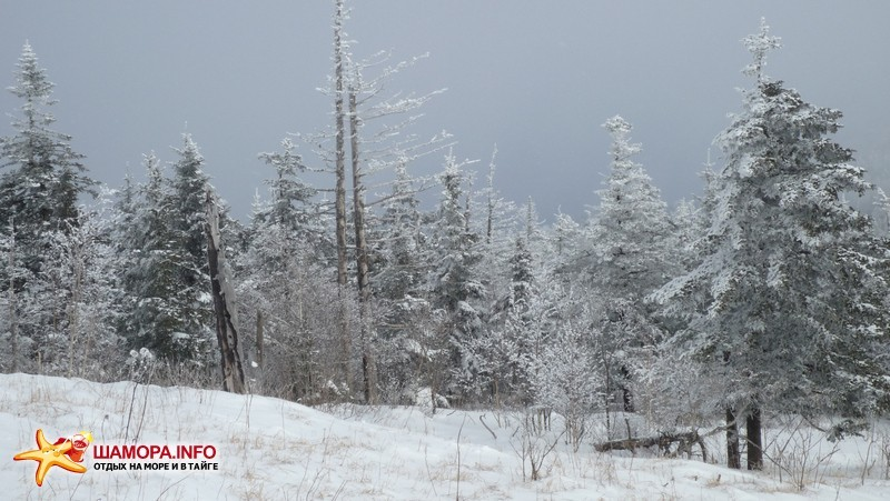 Фото 10094 | НГ на Туманной