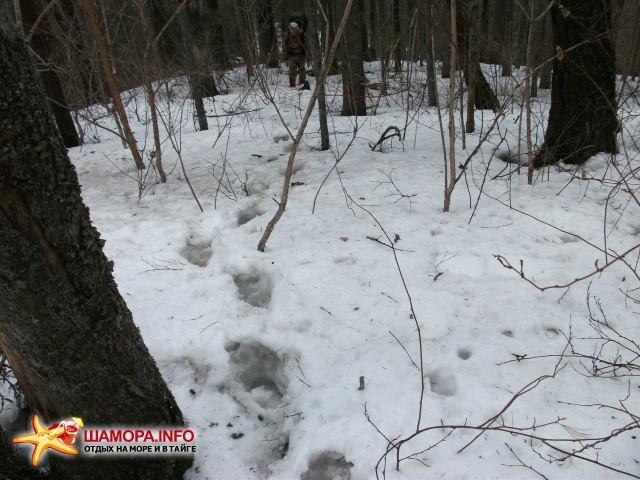 А здесь снег уже сплошной глубиной по колено. Хотите потропить? | Весна  на Алексеевке