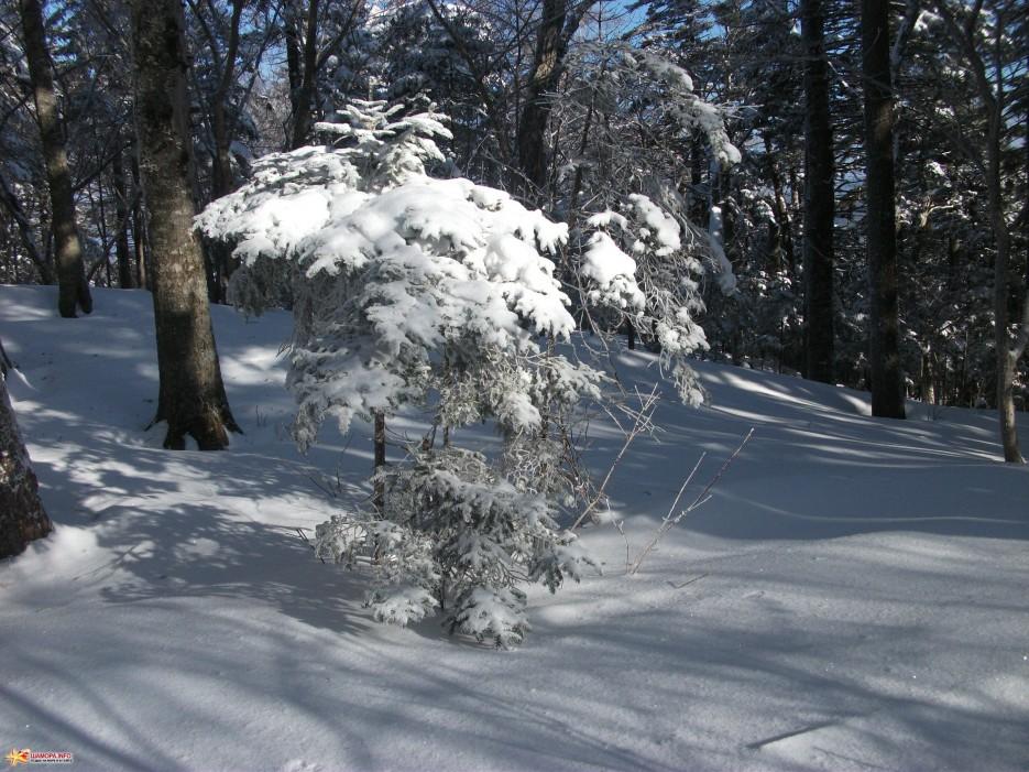 Заснеженный лес на хребте | Какого цвета новогодний снег