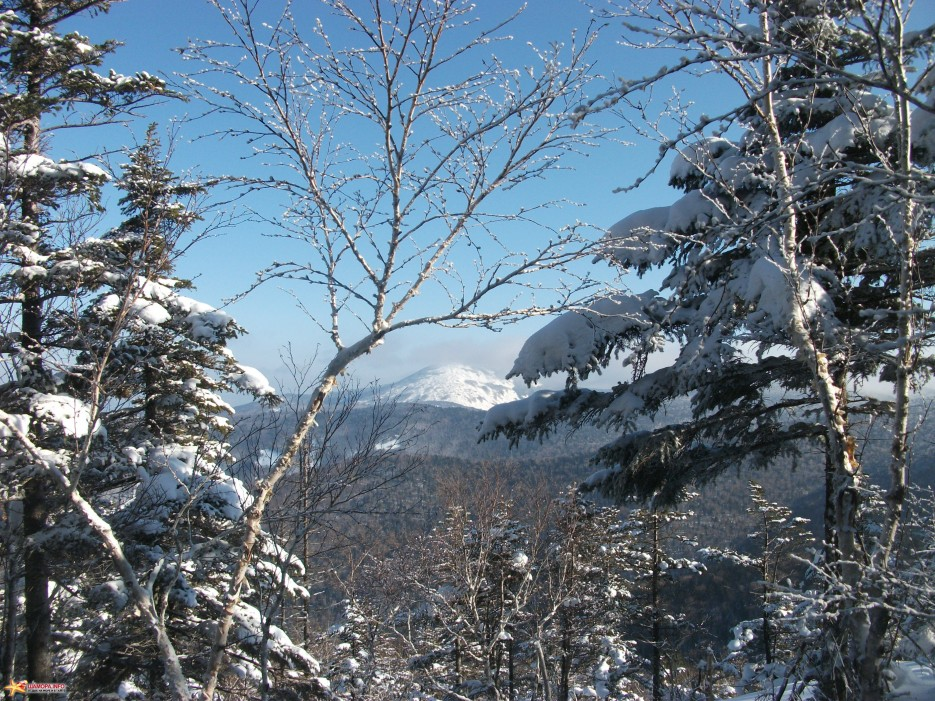 Фалаза блестит сквозь ветви деревьев | Какого цвета новогодний снег