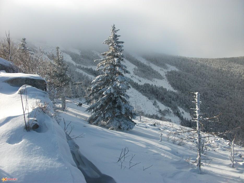 Новогодняя елка   Какого цвета новогодний снег
