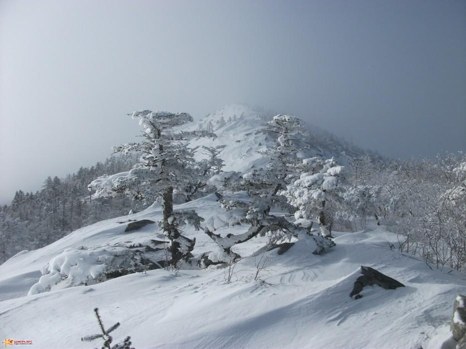 Чудные деревья на вершине Пидана | Какого цвета новогодний снег