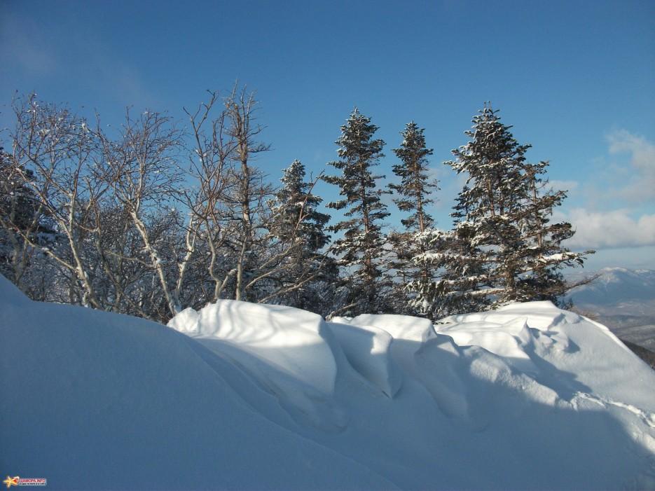 Снежная волна | Какого цвета новогодний снег