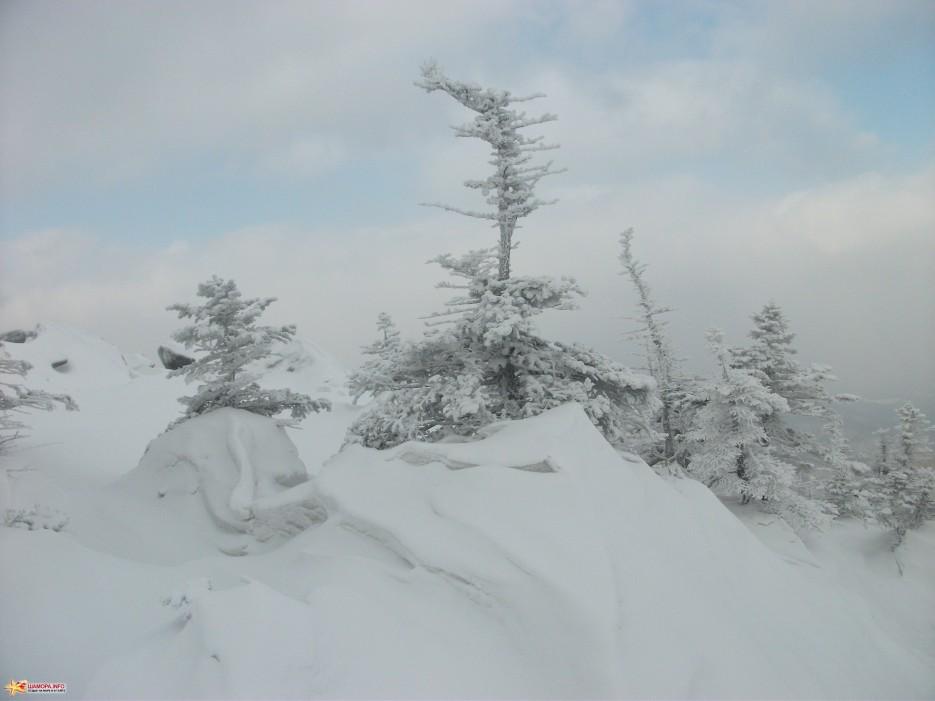 Снежные причуды Забавные снежные надувы вокруг деревьев | На Пидан налегке