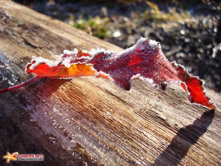 Фото 12969 | Пидан-загадка природы....