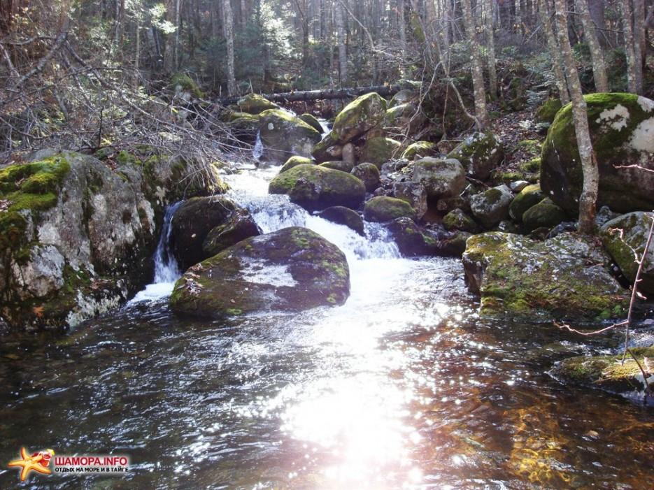 Фото 12982 | Пидан-загадка природы....