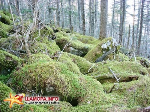 Фото 12992 | Пидан-загадка природы....