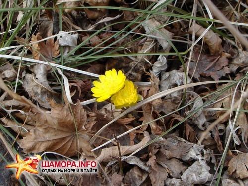 Фото 14853   Весна....
