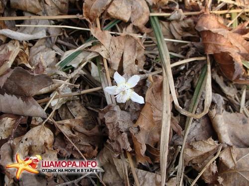 Фото 14854 | Весна....