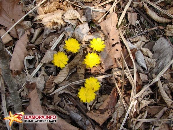 Фото 14855 | Весна....