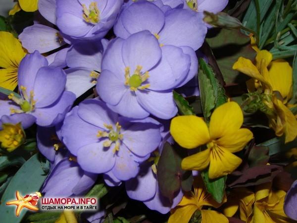 Фото 14859 | Весна....
