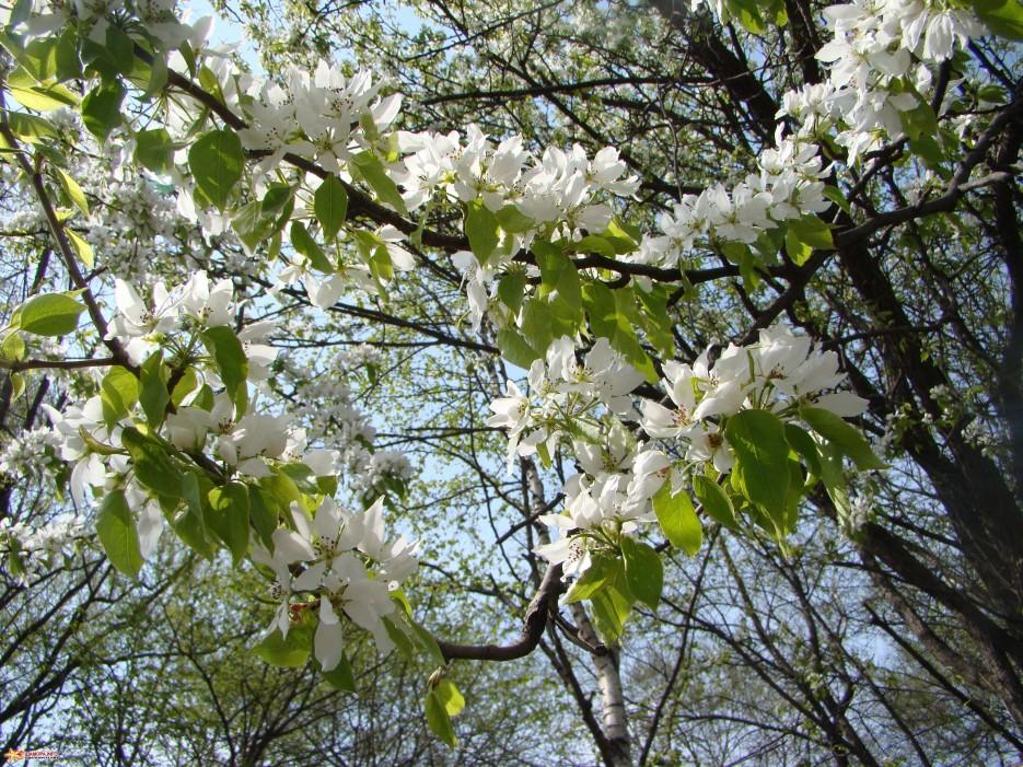 Фото 14869 | Весна....