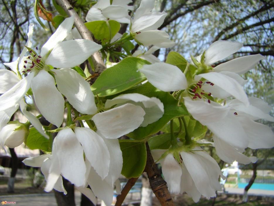 Фото 14870   Весна....