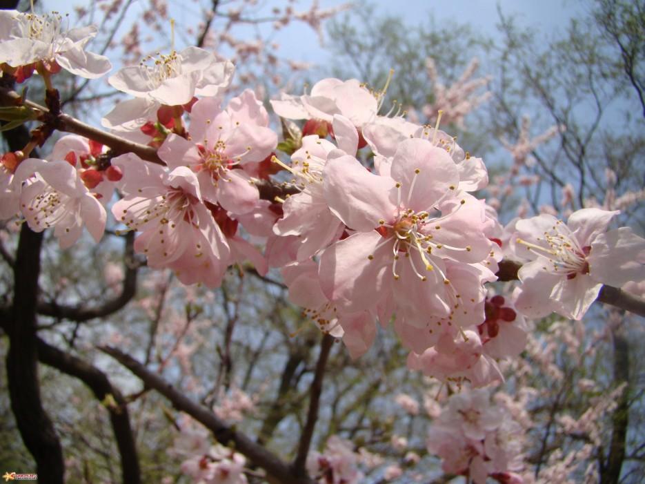Фото 14873 | Весна....