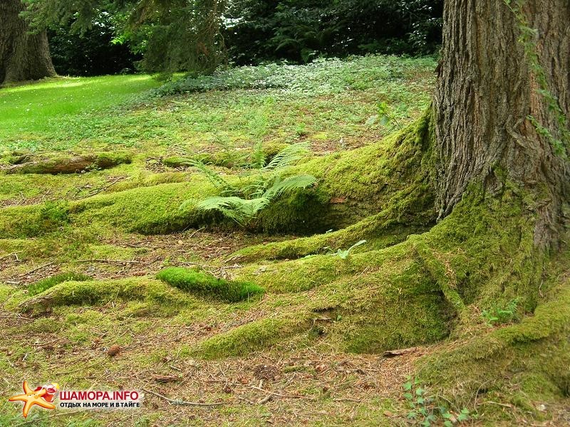 дом эльфов и фей | Ирландия
