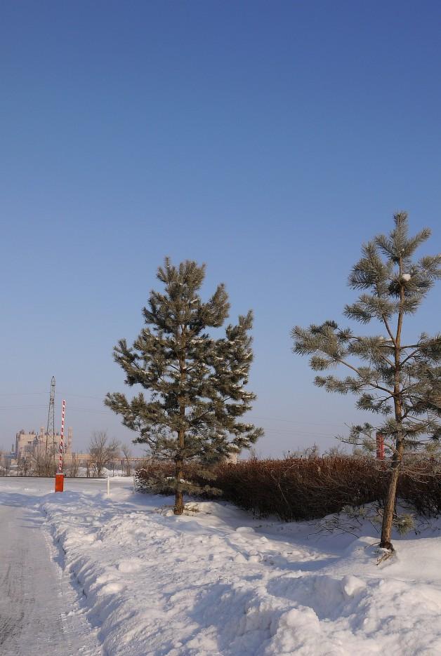 Зимой в Приморье красиво :) | По дороге на Восток