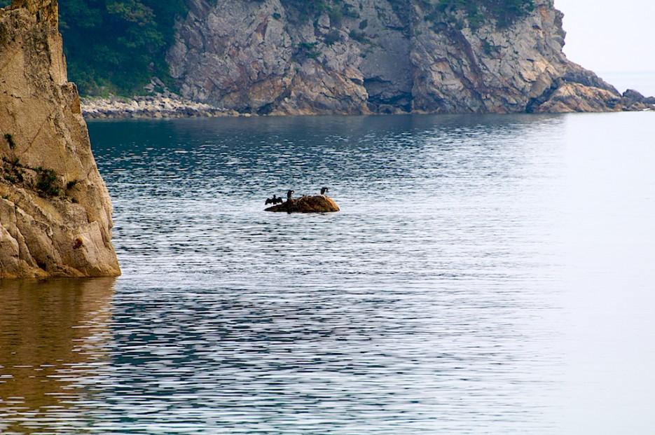 Бакланы на скальном выступе возле мыса Сосновый | Морской государственный заповедник