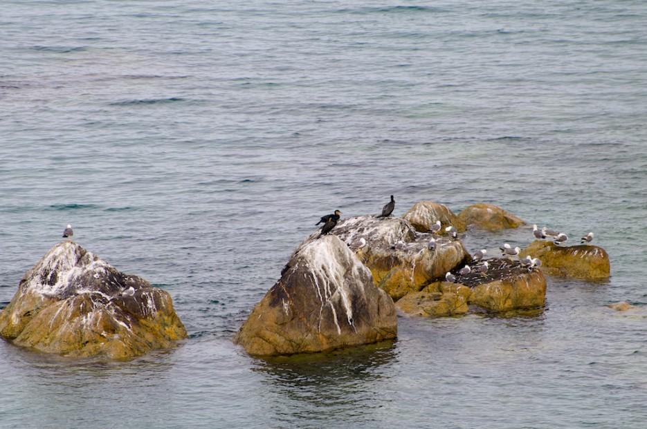 Бакланы на скалах   Морской государственный заповедник