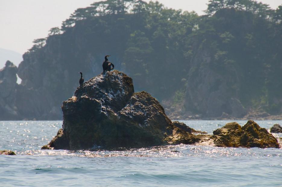 Бакланы на скалах на фоне мыса Сосновый | Морской государственный заповедник