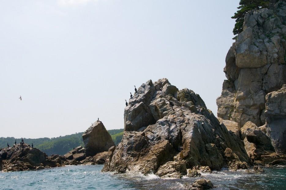 Бакланы на скалах Возле мыса Льва | Морской государственный заповедник