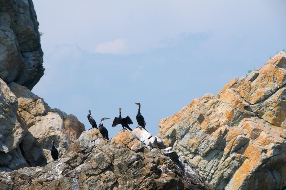 Бакланы на скалах | Морской государственный заповедник