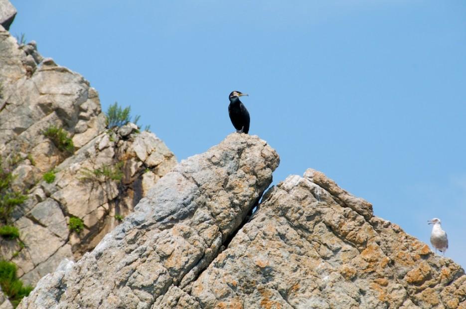 Баклан и чайка | Морской государственный заповедник