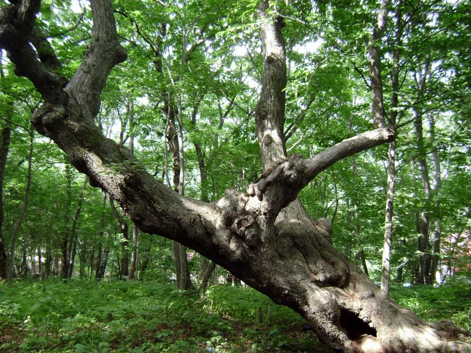 Бухта Муравьиная, в лесу. | Приморье