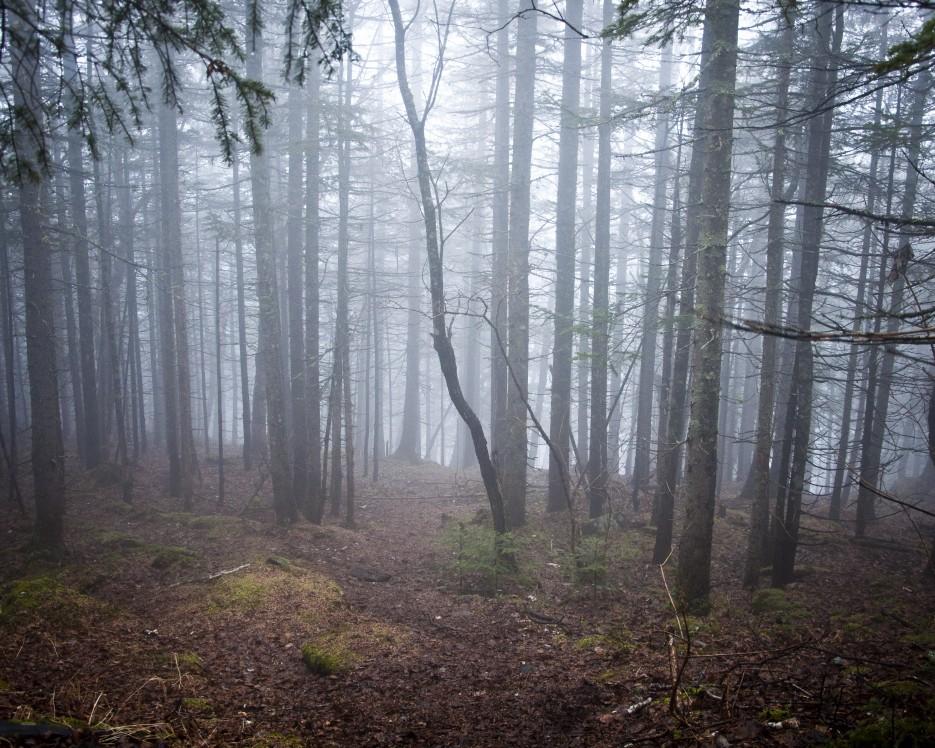 Утренний туман.  Гора Туманная. Партизанский р-н. | От Хасана до...