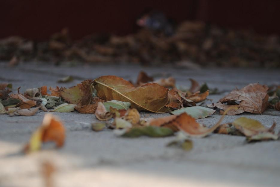 Листья опадают, ближется зима!   Владивосток