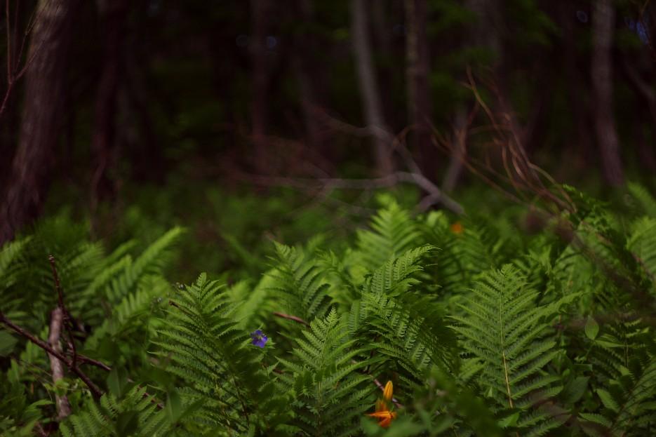 Заросли папоротника в лесу | Летние виды Преображения