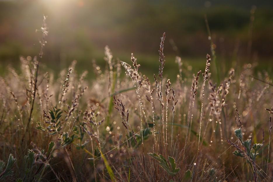Рассвет в росе на мысе Островном | Летние виды Преображения