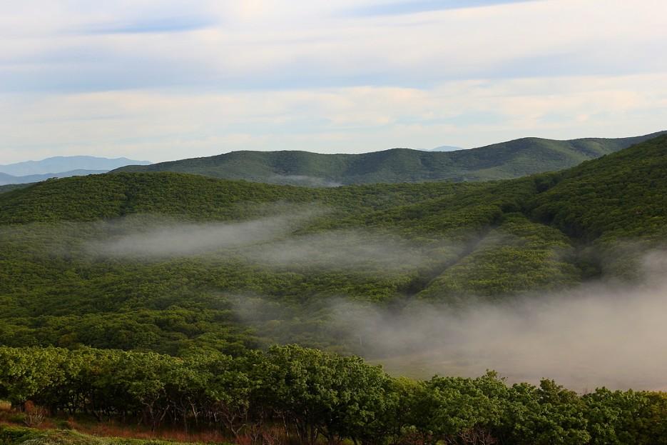 Мыс Островной. Остатки утреннего тумана над лесом. | Летние виды Преображения