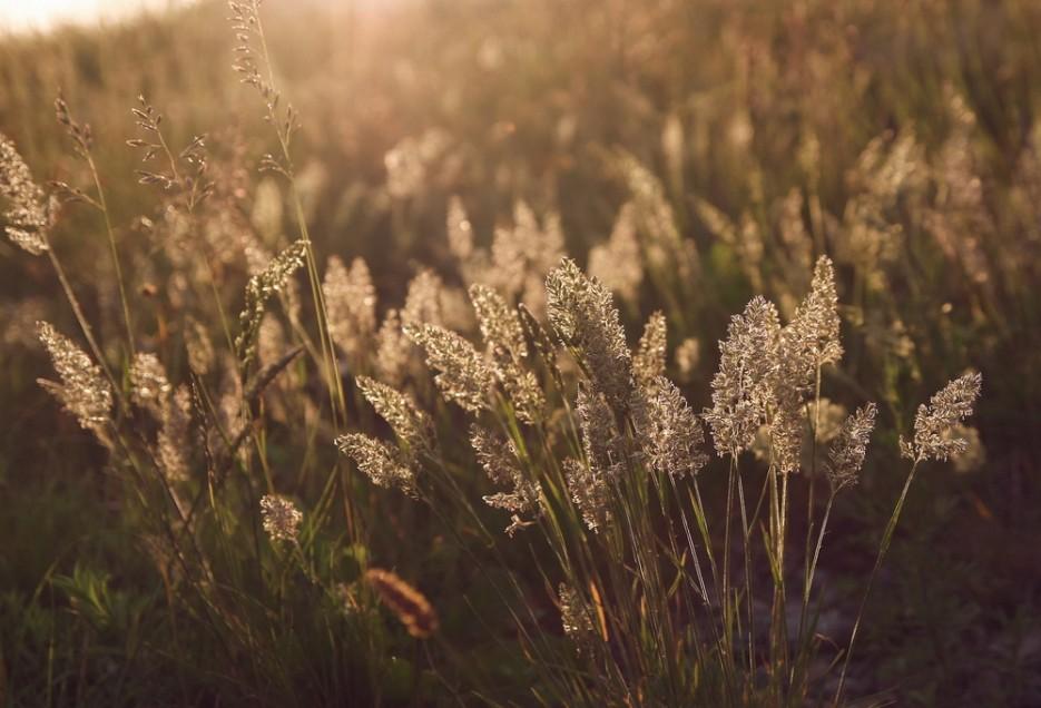 Закатный свет в траве 26-й батареи | остров Аскольд