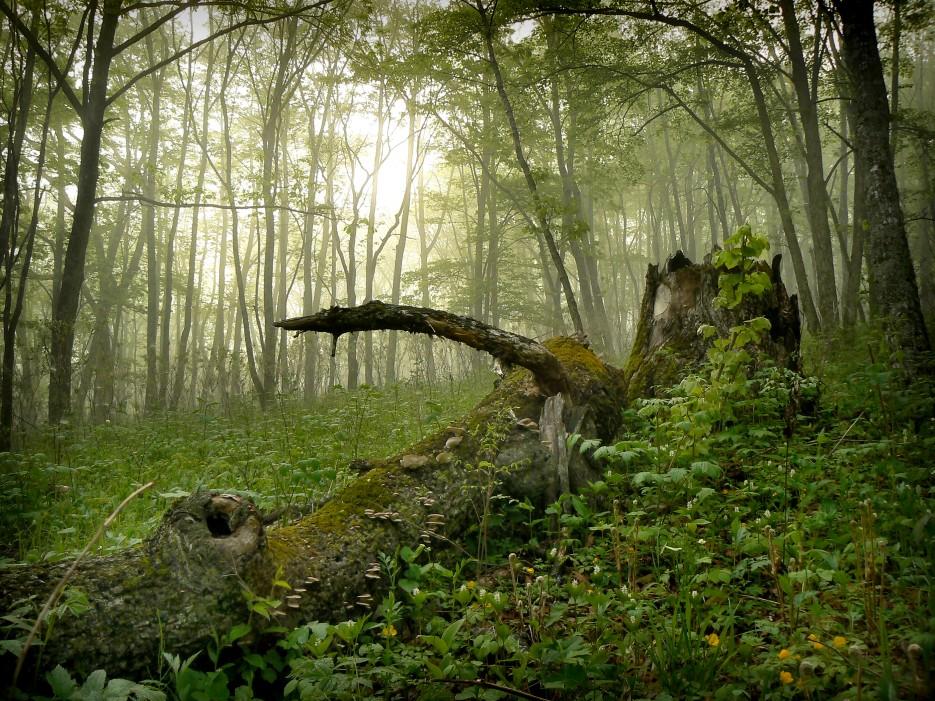 На склоне горы Янковского. | Леса, реки, горы Хасанского района