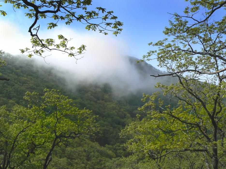 Когда рассеялся туман...   Гора Янковского.   Леса, реки, горы Хасанского района