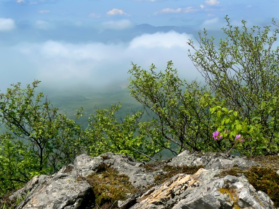 Выше тумана.  Гора Янковского 44о м.   Леса, реки, горы Хасанского района