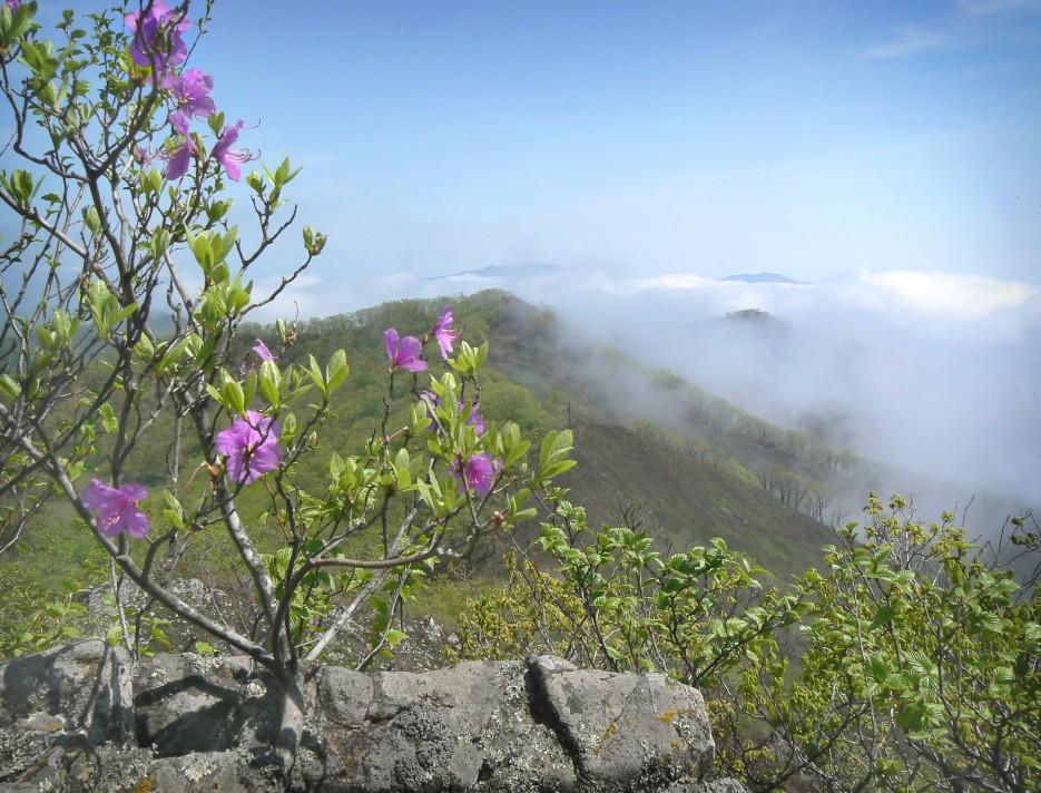 На горе Янковского - туман, нормальная приморская погода... | Леса, реки, горы Хасанского района