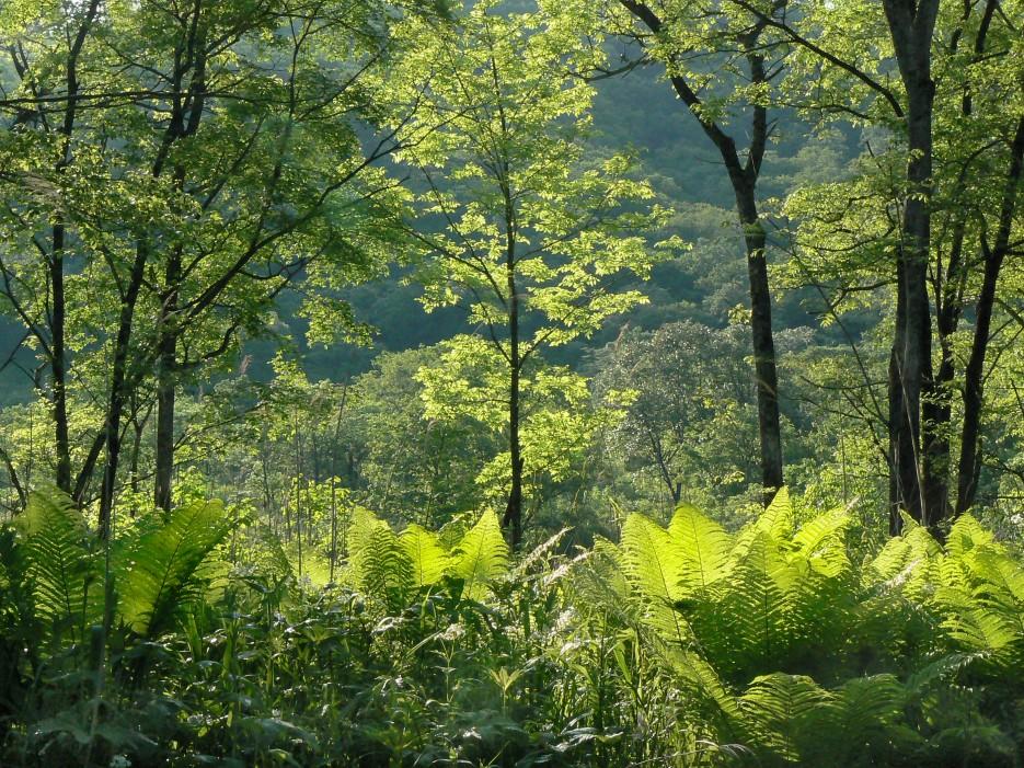 Контражур.   На р.Алимовка. | Леса, реки, горы Хасанского района
